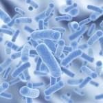 フェカリス菌の効能と効果!【健康維持には欠かせない】